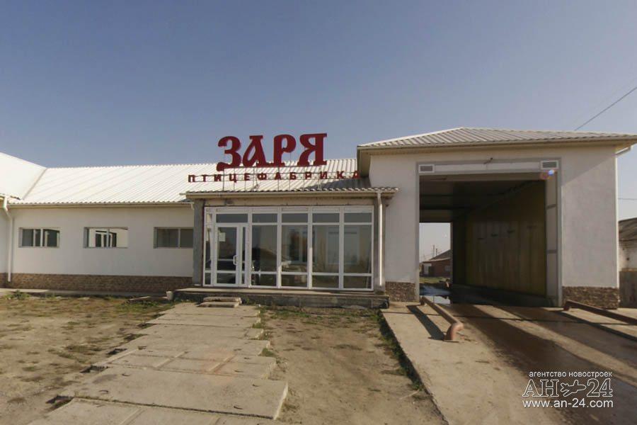 племсовхоз элита красноярского края Воронеже